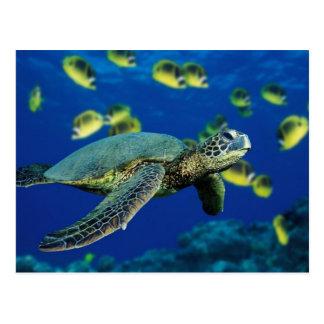 Meeresschildkröte Postkarten