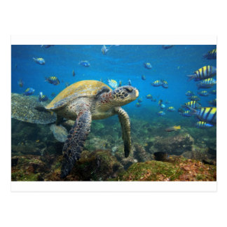 Meeresschildkröteschwimmen in Lagune Postkarte