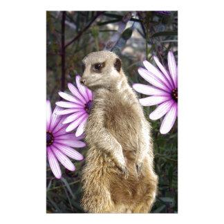 Meerkat_And_Daisies, _ Briefpapier