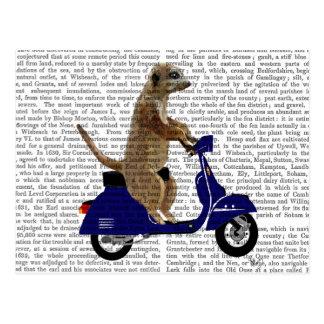 Meerkat auf dunkelblauem Moped Postkarte