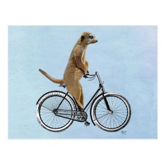 Meerkat auf Fahrrad 2 Postkarte