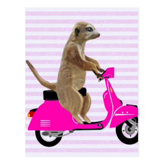 Meerkat auf rosa Moped 2 Postkarte