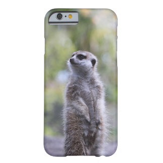 Meerkat auf Uhr-kaum dort Telefon-Kasten Barely There iPhone 6 Hülle