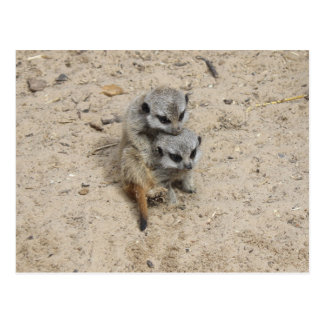 Meerkat Baby-Postkarte Postkarte