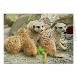 Meerkat Familie - Karte