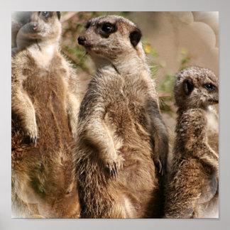Meerkat Familien-Druck Plakat