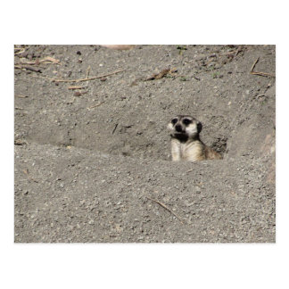 Meerkat, Fotografie heraus knallend Postkarte