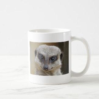 Meerkat herauf nahes kaffeetasse