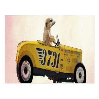 Meerkat in frisiertem Auto 3 Postkarte