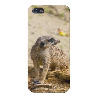 Meerkat iPhone 5 Cover