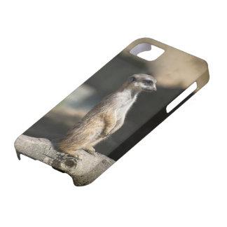 Meerkat iPhone 5 Etui