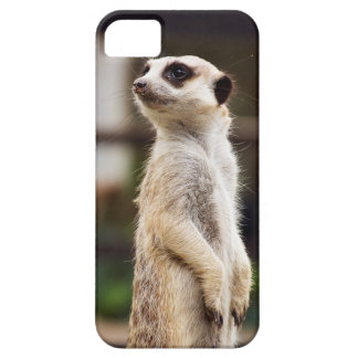 Meerkat iPhone Fall iPhone 5 Schutzhüllen