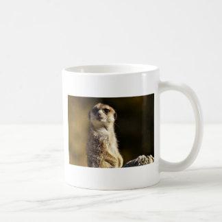 Meerkat Kaffeetasse