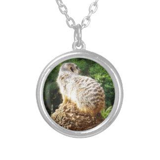 Meerkat mit hohen Ansichten, Versilberte Kette