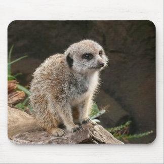 Meerkat Mousepads