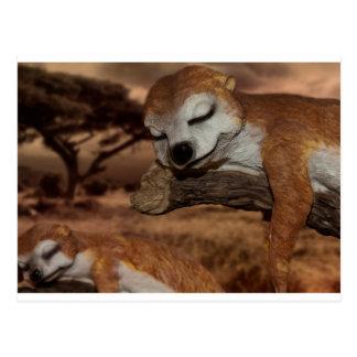 meerkat postkarte