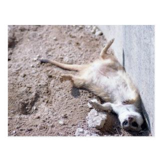 Meerkat Postkarte (004)