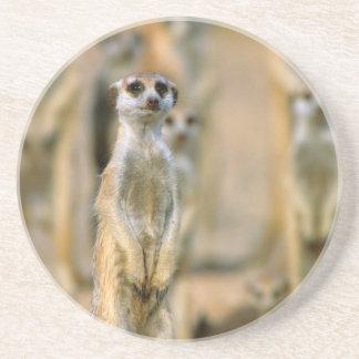 Meerkat (Suricata Suricatta) Wachposten, Karas 2 Getränkeuntersetzer