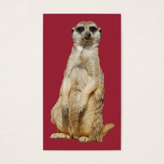 Meerkat Visitenkarte