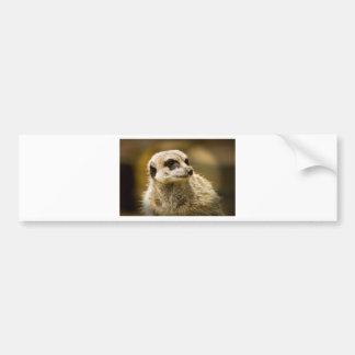 Meerkats Autoaufkleber