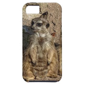 Meerkats Etui Fürs iPhone 5