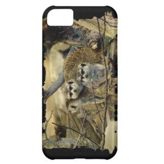 Meerkats, Mungo, afrikanische wild lebende Tiere, iPhone 5C Hülle