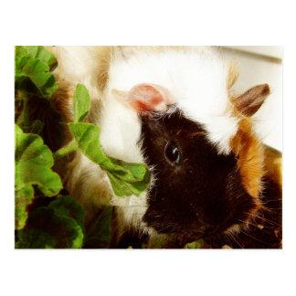 Meerschweinchen in den Blumen Postkarte