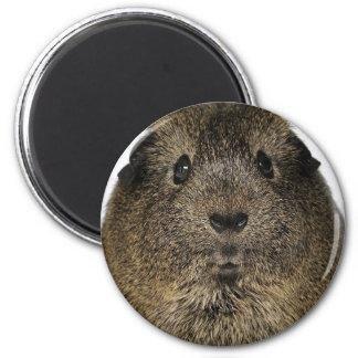 Meerschweinchen-nahes hohes runder magnet 5,7 cm
