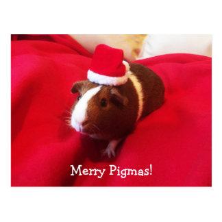 Meerschweinchen-Weihnachtsmann-Weihnachtsfeiertag Postkarte