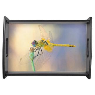 Mehrfarbige Libelle Tablett