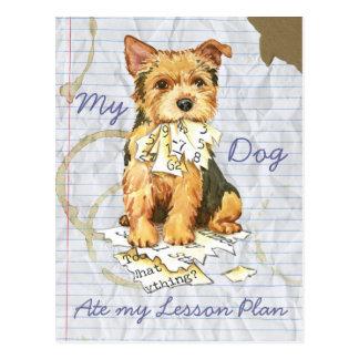 Mein Norwich Terrier aß meinen Unterrichtsplan Postkarte