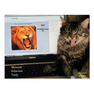 Meine Katze studiert an der Postkarte
