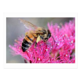 Melaluca wilsonii mit Honigbiene Postkarte
