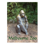 Melbourne-Zoo-Gorilla Postkarten
