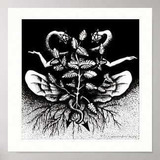 Melissa officinalis (Zitronen-Balsam) - auf Weiß Poster