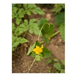 Melone-Blume Postkarte