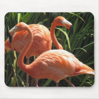 Menge der Flamingo-Mausunterlage Mousepad