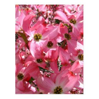 Menge des Rosas Postkarte