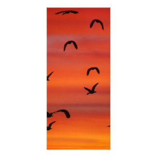 Menge von Fliegen Gänsen Werbekarte