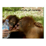 Menschenaffe-Freundinnen an der Pause Postkarten