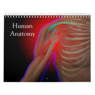 Menschliche Anatomie Abreißkalender