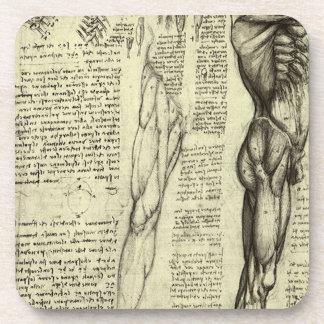 Menschliche Anatomie-männliche Muskeln durch Getränkeuntersetzer