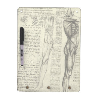 Menschliche Anatomie-männliche Muskeln durch Memoboard