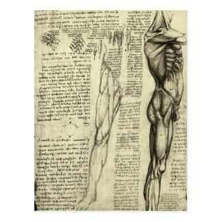 Menschliche Anatomie-männliche Muskeln durch Postkarte