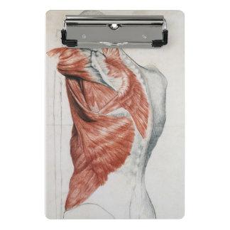 Menschliche Anatomie; Muskeln des Torsos und der Mini Klemmbrett