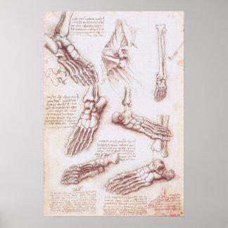 Menschliche Anatomie-Skeleton Fuß-Knochen durch da Poster