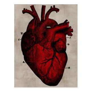 Menschliche Herz-Postkarte Postkarte