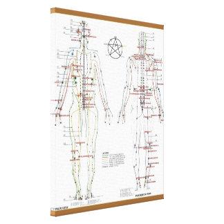 Menschliche Meridiane u. Druck-Pint-Diagramm wicke Gespannte Galeriedrucke
