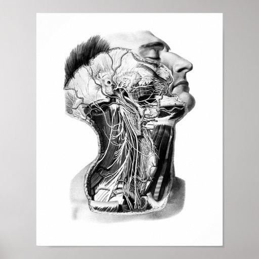 Menschlicher Kopf-Anatomie-Entwurf Plakat