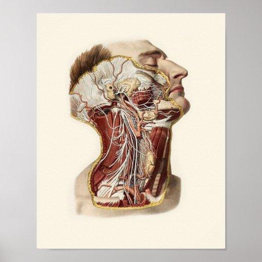 Menschlicher Kopf-Anatomie-Entwurf Posterdruck